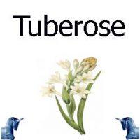 Tuberose