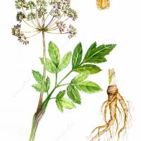 Tinctures & Liquid Herbal Extracts