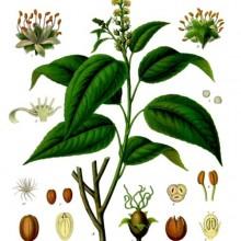 Western Herbal