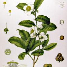Traditional Loose Leaf Teas