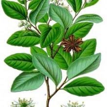 Afro Caribbean Herbal