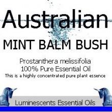 Australian Mint Balm Bush