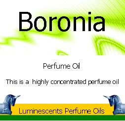Boronia perfume oil label