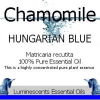 Hungarian Blue Chamomile
