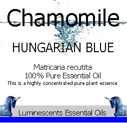 Hungarian Blue Chamomile