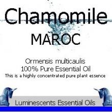 chamomile maroc