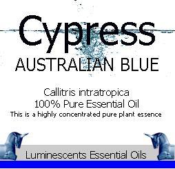 Cypress Australian Blue