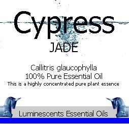 jade cypress