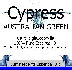 cypress australian green