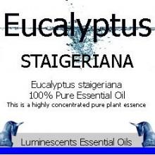eucalyptus staigeriana labe