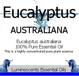 eucalyptus australiana