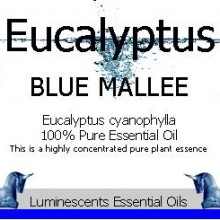 eucalyptus blue mallee essesntial oil