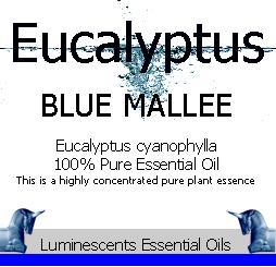 eucalyptus blue mallee essesntial oil