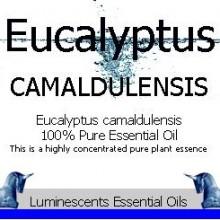 eucalyptus camaldulensis label