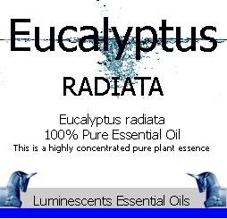 Eucalyptus radiata label