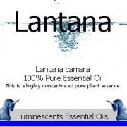 lantana essential oil label