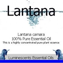 lantana essential oil label