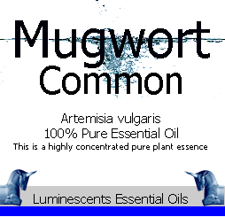 common-mugwort-essential-oil