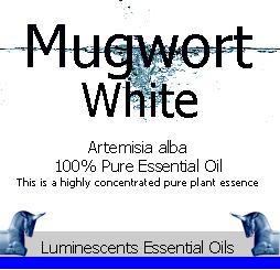 White Mugwort Essential-oil