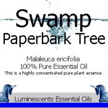 swamp paperbark tree essential oil