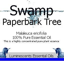 swamp paperbark tree essential oil