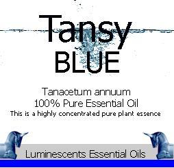 tansy blue