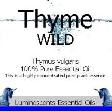 Wild Thyme
