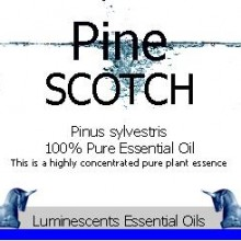 scotch pine essential oil label