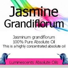 Jasmine grandiflorum