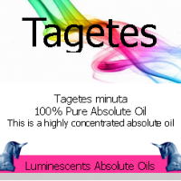 Tagetes-absolute-oil