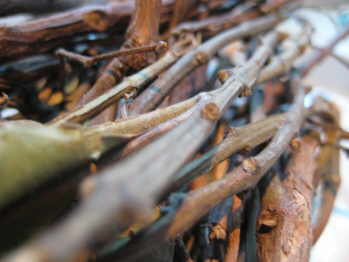 Pimento Bark