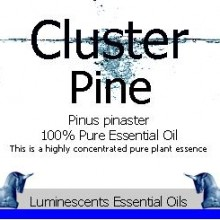 cluster pine essential oil label