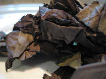 noni leaf 001