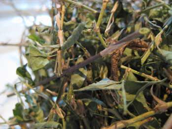 Medina Herb