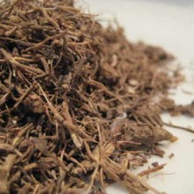 blue cohosh root