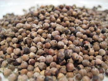 agnus castus berries