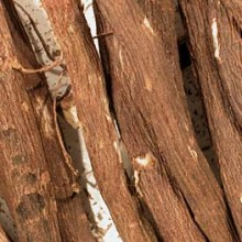 Liquorice Root Whole