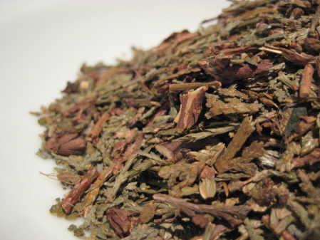 thuja leaf