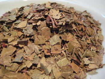 wintergreen herb